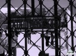 Бухенвальд  был местом планомерного геноцида