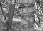 Бухенвальд, фрагмент охранного ограждения